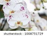 orchid flower in garden at...   Shutterstock . vector #1008751729