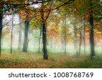 foggy autumn morning   Shutterstock . vector #1008768769