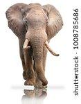 Elephant Bull White Background Mirror - Fine Art prints