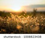 nature grass flower in sunset... | Shutterstock . vector #1008823438