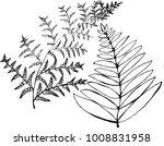 black and white fern... | Shutterstock . vector #1008831958