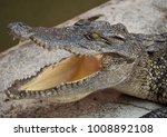 crocodile saltwater thailand | Shutterstock . vector #1008892108
