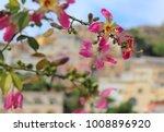 pink flower pink silk floss  ... | Shutterstock . vector #1008896920