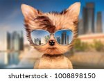 funny adorable dog wearing... | Shutterstock . vector #1008898150