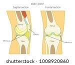 vector illustration. anatomy of ... | Shutterstock .eps vector #1008920860