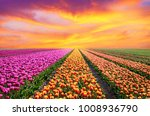 incredibly beautiful spring... | Shutterstock . vector #1008936790