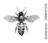 bee hand drawing vintage... | Shutterstock .eps vector #1008937933