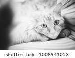 Stock photo ginger cat on the bed 1008941053