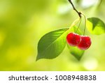 two fresh juicy ripe cherries... | Shutterstock . vector #1008948838