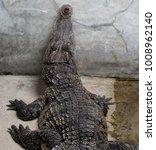 crocodile saltwater thailand.... | Shutterstock . vector #1008962140