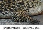 crocodile saltwater skin. hi res | Shutterstock . vector #1008962158