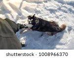 blue eyed black dog breed... | Shutterstock . vector #1008966370