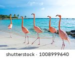 pink flamingo  aruba island | Shutterstock . vector #1008999640