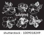 ink hand drawn set of tropical... | Shutterstock .eps vector #1009018249