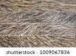 Set Of Four Panoramic Boar Fur...