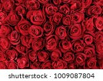Stock photo natural red roses background 1009087804