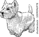 a scottish terrier in waiting | Shutterstock .eps vector #1009096978