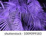 trendy design  nature and... | Shutterstock . vector #1009099183