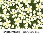 white plumeria flowers in... | Shutterstock .eps vector #1009107118