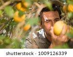 man picking orange | Shutterstock . vector #1009126339