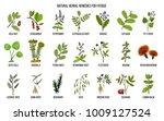 best medicinal herbs for... | Shutterstock .eps vector #1009127524