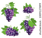 collection of isolated grape.... | Shutterstock .eps vector #1009127899