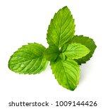closeup of fresh spearmint... | Shutterstock . vector #1009144426