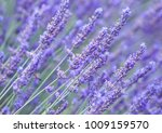 landscape of provence  ... | Shutterstock . vector #1009159570