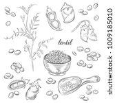 lentil plant hand drawn...   Shutterstock .eps vector #1009185010
