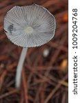 Small photo of mushroom all over