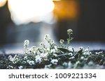 nature flowers. vintage outdoor ... | Shutterstock . vector #1009221334