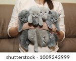 Stock photo a woman is holding a lot of kittens 1009243999