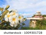 white and yellow plumeria... | Shutterstock . vector #1009301728