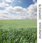 Grass and sky with clouds - stock photo