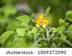 flowers are blooming with green ... | Shutterstock . vector #1009372090