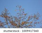 leaf of bombax ceiba tree with... | Shutterstock . vector #1009417360