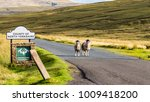 Two Sheep As Boarder Guards To...