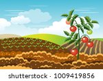 tomato plant. growth of... | Shutterstock .eps vector #1009419856