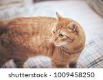 Stock photo ginger cat on the bed 1009458250