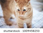 Stock photo ginger cat on the bed 1009458253