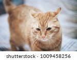 Stock photo ginger cat on the bed 1009458256