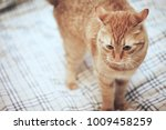 Stock photo ginger cat on the bed 1009458259