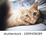 Stock photo ginger cat on the bed 1009458289