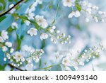 floral spring background  soft... | Shutterstock . vector #1009493140
