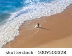 groom and bride at beach | Shutterstock . vector #1009500328