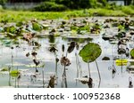 lotus leaves in pool in the rustic city - stock photo