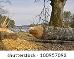 a large tree that has been cut... | Shutterstock . vector #100957093