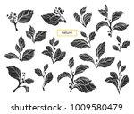 vector set of realistic branch... | Shutterstock .eps vector #1009580479