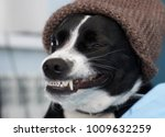 funny dig smile  | Shutterstock . vector #1009632259