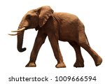african elephant isolated on... | Shutterstock . vector #1009666594
